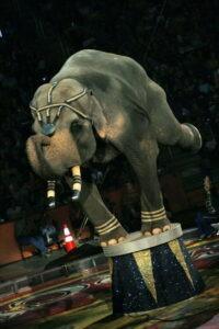 circus087